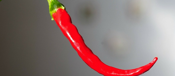 close up red chilli